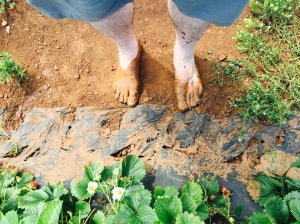 My husband's feet after our last strawberry picking excursion.